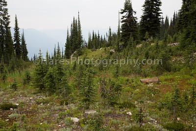 Mt Revelstoke NP-4869