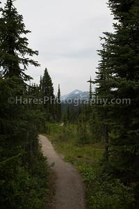 Mt Revelstoke NP-4956