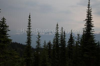 Mt Revelstoke NP-4912