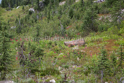 Mt Revelstoke NP-4868