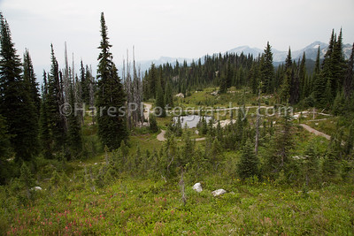 Mt Revelstoke NP-4923