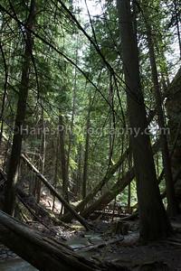 Mt Revelstoke NP-4852