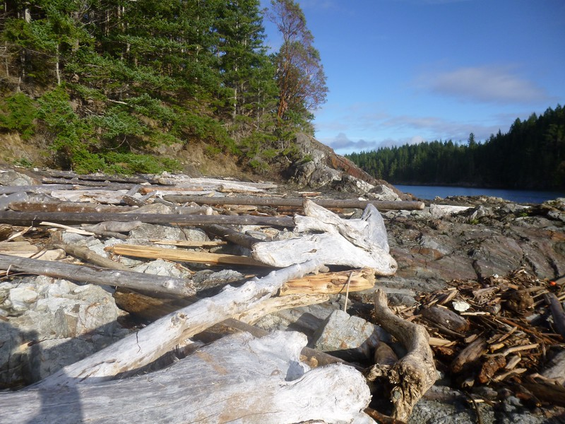 Typical B.C. shoreline