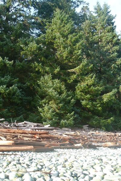Trees, logs, rocks