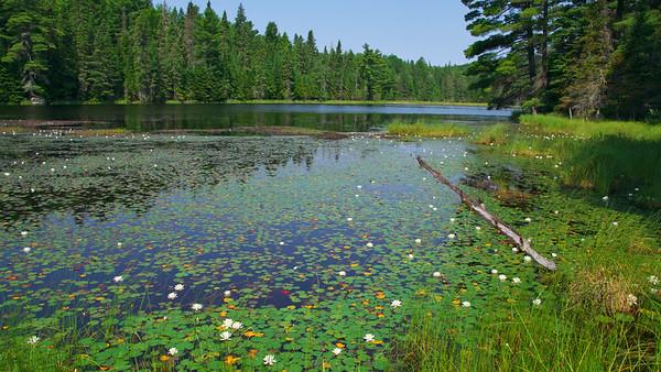 Beaver Pond Trail