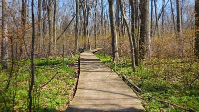 Tilden's Wood Trail