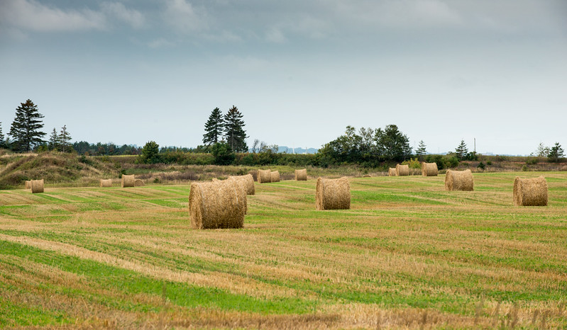 Hay Bales in Prince Edward Island