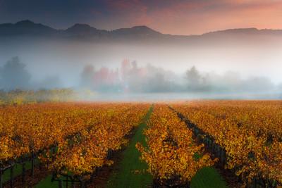 Calistoga on a misty morning 3 stop soft GND