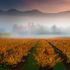Calistoga on a misty morning<br /> 3 stop soft GND