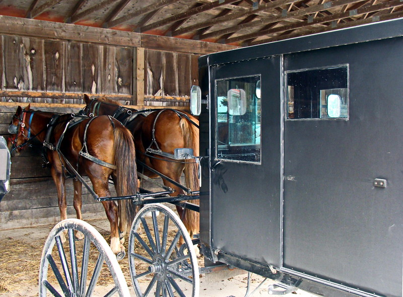 Mennonite Carriage and Horses