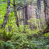 WA 001<br /> <br /> The 1.6 mile Baker Preserve Trail winds through a beautiful rainforest environment at Baker Preserve, Lummi Island, Washington State.