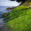 WA 008<br /> <br /> Emerald green moss covers the rocky shoreline near Sunset Beach on Lummi Island, Washington.