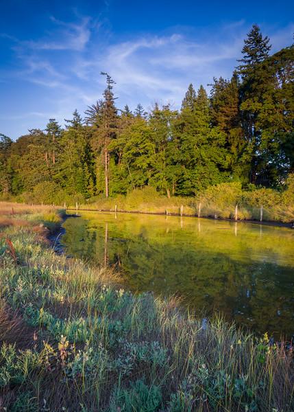 WA 013<br /> <br /> Birch Bay State Park, Blaine, Washington.
