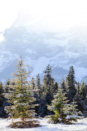 Morning sun in Banff National Park
