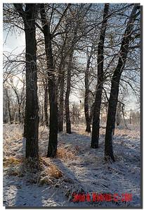 1416_1987008-R1-C2-NCS-Nature