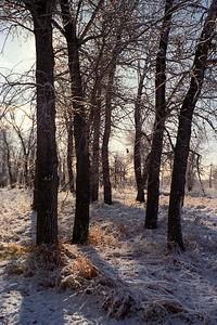 1987008-R1-C2-fish-creek-trees
