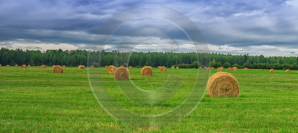 Farmland Dayton Valley Alberta Canada Panoramic Landscape Photography Stock Image Leave Autumn Barn - 017157 - 28-08-2015 - 17223x7677 Pixel