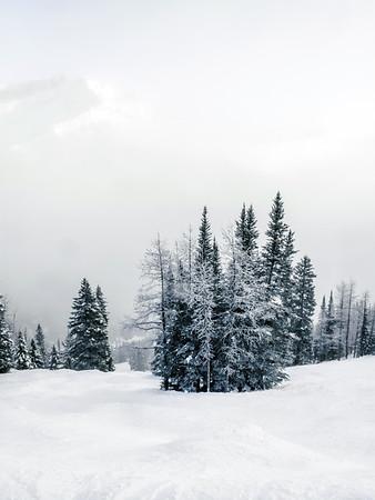 Trees on a ski slope at Lake Louise Ski Resort in Alberta, Canada