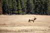 Jasper, Town - Elk chase scene, 3