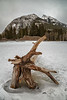 Banff, Town - A stump frozen in the Bow River near Bow Falls