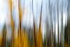 Jasper, Patricia Lake - Long exposure motion of fall colors