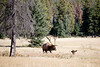 Jasper, Town - Elk chase scene, 9