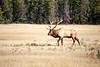 Jasper, Town - Elk chase scene, 7
