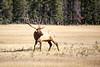 Jasper, Town - Elk chase scene, 8