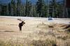 Jasper, Town - Elk chase scene, 5