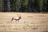 Jasper, Town - Elk chase scene, 4