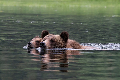 Grizzly_Sow and Cub_02P0883-8x12