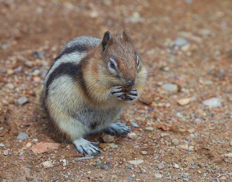 Squirrel-1DX_9612