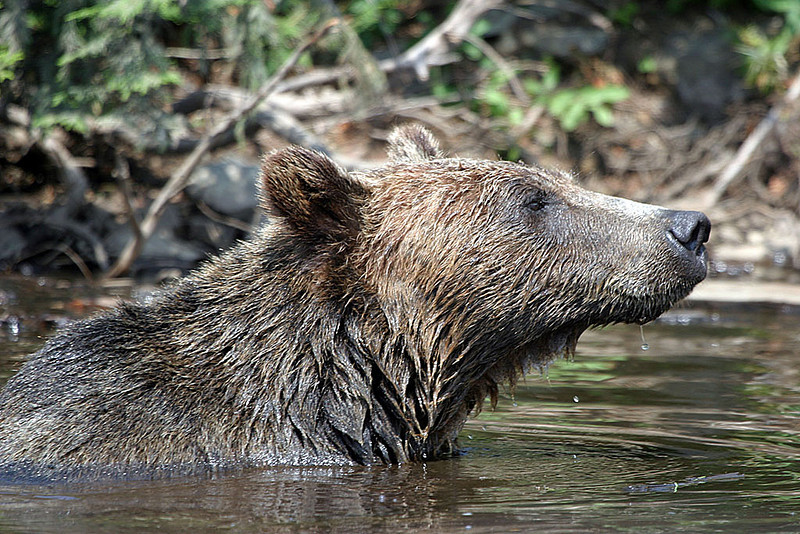 Bear_IMG_0095