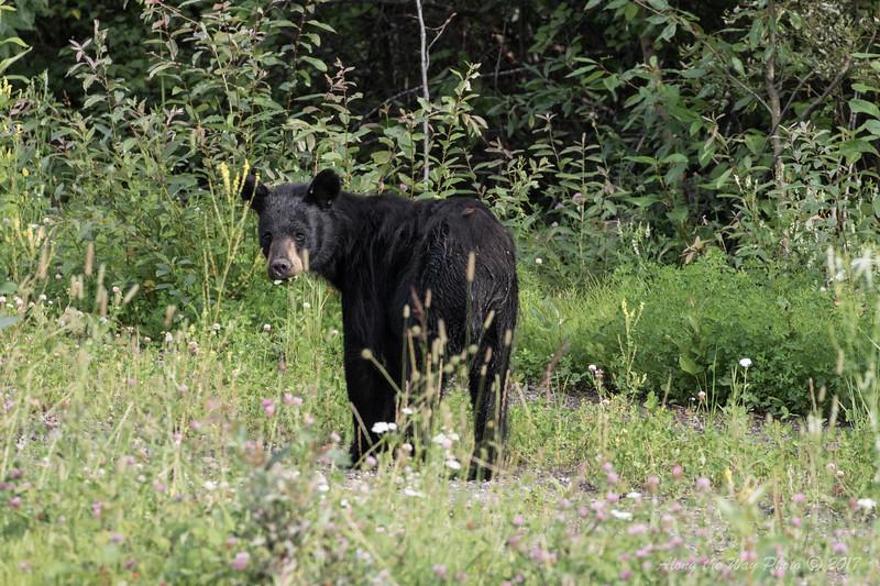 Yukon-5577