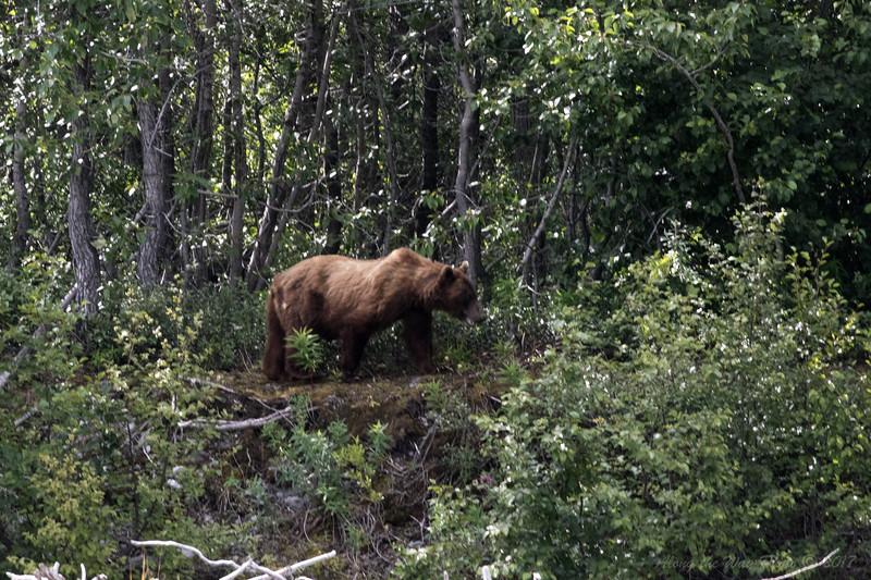 Yukon-5355