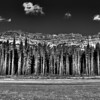Old Growth Forest in Black and White near Banff, Alberta Canada