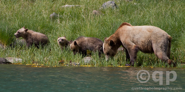 FOURSOME OF BEARS