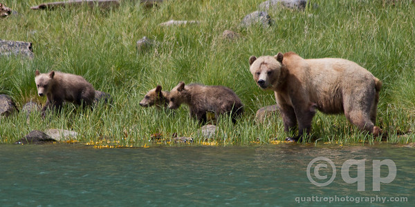 THE THREE LITTLE GRIZZLY BEARS