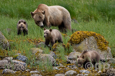 FAMILY OF GRIZZLYS