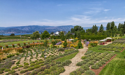 Okanagan Lavender and Herb Farm
