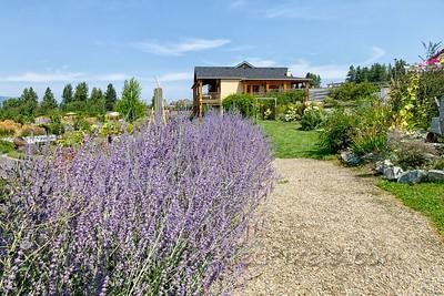 Okanagan Lavender Farm