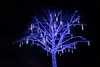 Vancouver Island, Butchart Gardens - Tree with blue icicle lights hanging from it