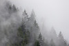 Campbell River, Toba Inlet - Foggy forest ridgeline