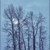 A Winter sun tries valiantly to break through the Grey overcast sky without success. To bring the scene to life, the Greys were replaced with a cool bluish tone that visually represents the season.