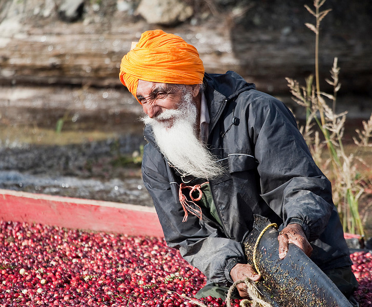 Taken in the Cranberry fields of Richmon, BC. A worker strains to pull the floating dam that brings the berries closer to the loading ramp.