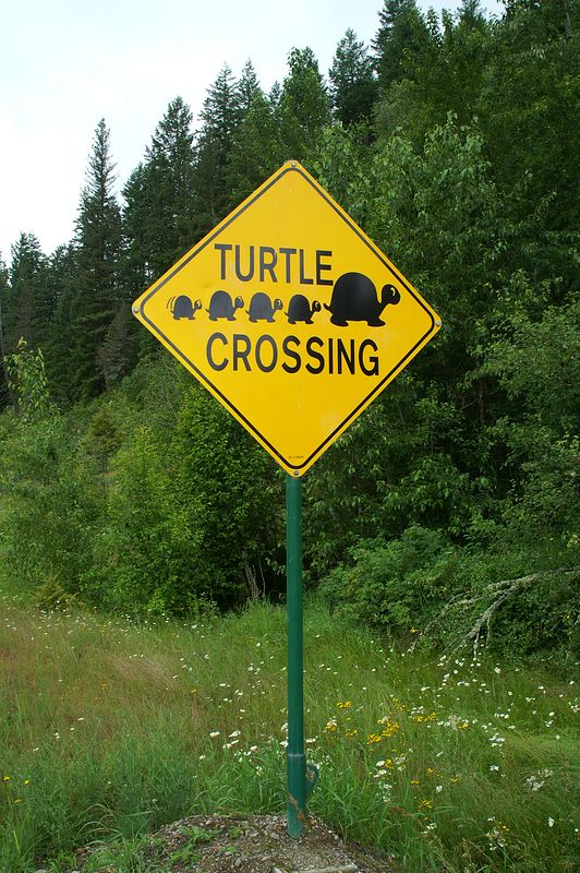 Turtle Sign.