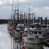 Several boats of the Steveston Fishing Fleet