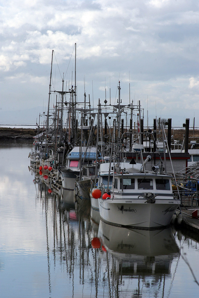 Several boats of the Steveston Fishing Fleet