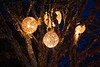 Vancouver Island, Butchart Gardens - Four woven balls hanging from trees with Christmas lights
