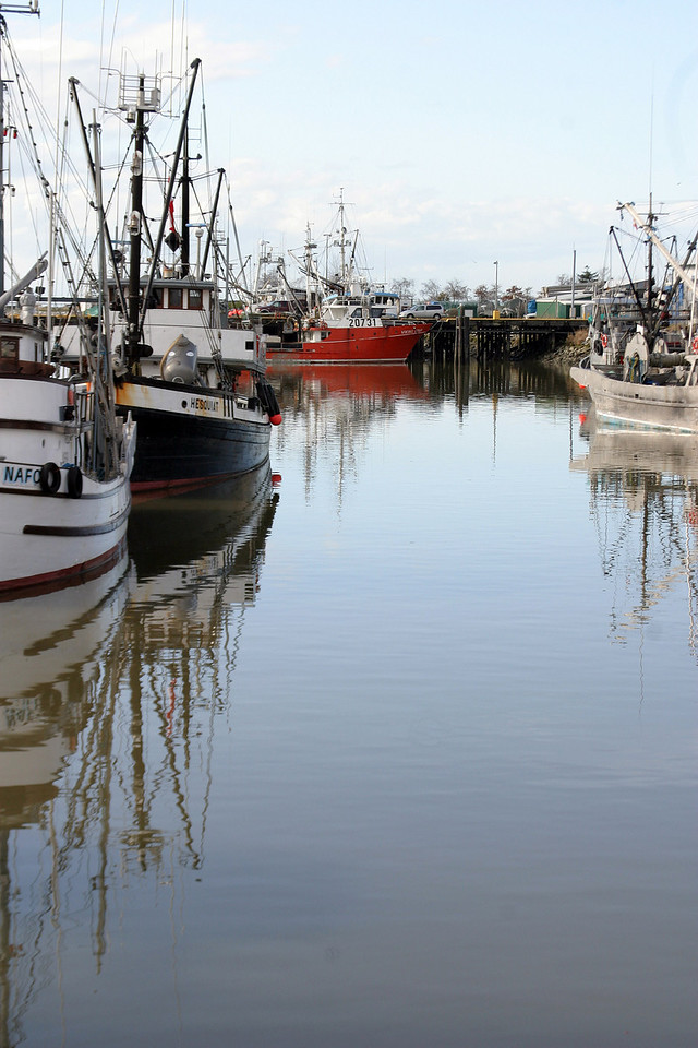 Fishing Fleet - Reflections - Steveston Harbour - BC